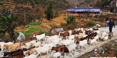 養殖創業致富的門路在哪?農村養殖創業的勵志箴言!