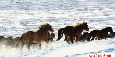 不要去追一匹不回頭的馬